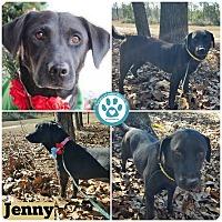 Adopt A Pet :: Jenny - Kimberton, PA