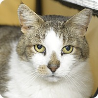 Adopt A Pet :: Carson - Whitehall, PA