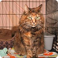 Adopt A Pet :: Tiger - Milford, MA