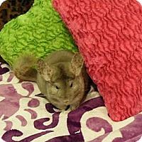 Adopt A Pet :: Kitty & Kat - Granby, CT