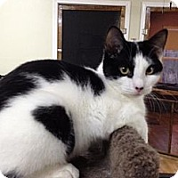 Adopt A Pet :: Murray - Monroe, GA