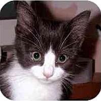 Adopt A Pet :: Schubert - Portland, OR