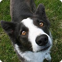 Adopt A Pet :: REGGIE - Nampa, ID
