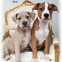 Adopt A Pet :: Puppy sisters: Mallory & Pam - New Orleans, LA