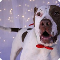Adopt A Pet :: Kingston - Phoenix, AZ