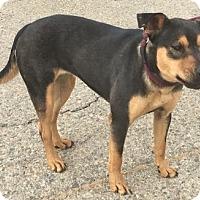 Adopt A Pet :: Carly - Canoga Park, CA
