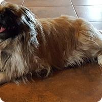 Adopt A Pet :: Gigi - Tucson, AZ