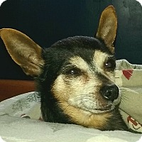 Adopt A Pet :: Cheech - Andalusia, PA