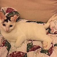 Adopt A Pet :: Isabelle - Palm Beach, FL