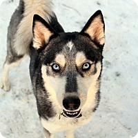 Adopt A Pet :: Kira - Youngsville, NC