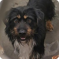 Adopt A Pet :: Caeden - Livingston, TX
