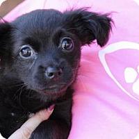 Adopt A Pet :: Wynonna Judd - Fresno, CA