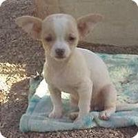 Adopt A Pet :: Huera's Humberta - Las Vegas, NV