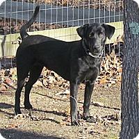 Adopt A Pet :: Aimee - West Bridgewater, MA