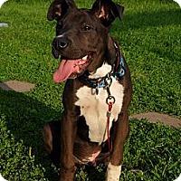 Adopt A Pet :: Diesel - Geismar, LA