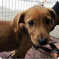 Adopt A Pet :: State pups - Alexandria, VA