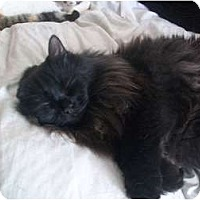 Adopt A Pet :: Big Boy - Portland, ME