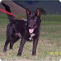 Adopt A Pet :: Raven - Honaker, VA