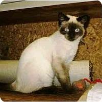 Adopt A Pet :: Hanna - Warren, OH
