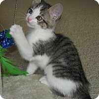Adopt A Pet :: Tweed - North Highlands, CA