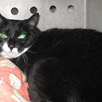 Adopt A Pet :: Missy - Roseville, CA