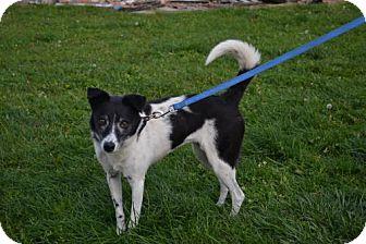Border Collie Mix Dog for adoption in Akron, Ohio - Terri