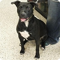 Adopt A Pet :: Cora - Minneapolis, MN