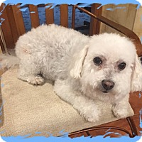 Adopt A Pet :: Adopted!!Millie - IN - Tulsa, OK