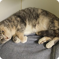 Adopt A Pet :: Suzie - Greensboro, NC