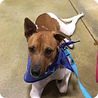 Adopt A Pet :: Fresco - Hallandale, FL