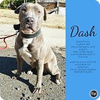 Adopt A Pet :: Dash - Union, NJ
