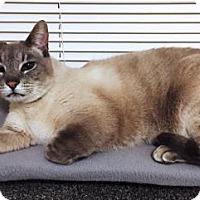 Adopt A Pet :: Claude - Pinckney, MI