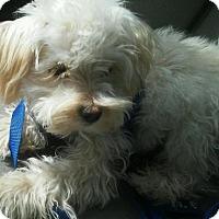 Adopt A Pet :: Casper - Surprise, AZ