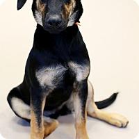 Adopt A Pet :: Shelly - Appleton, WI