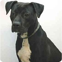Adopt A Pet :: Petey - Port Washington, NY