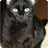 Adopt A Pet :: Morgan - Racine, WI