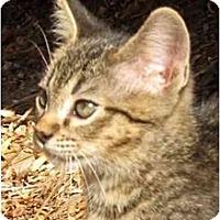 Adopt A Pet :: Louis - Davis, CA