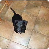 Adopt A Pet :: Reno - In CT (new video) - Adamsville, TN
