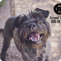 Adopt A Pet :: Dutchess *Needs Foster* - Las Vegas, NV