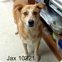 Adopt A Pet :: Jax - Greencastle, NC