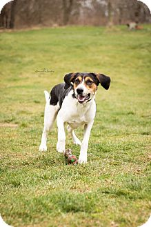 Hound (Unknown Type) Mix Dog for adoption in Eighty Four, Pennsylvania - Buford