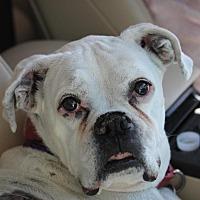 Adopt A Pet :: Blanca - Denver, CO
