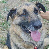 Adopt A Pet :: Lightning - Greeneville, TN
