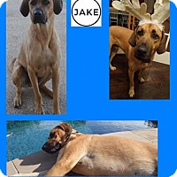 Adopt A Pet :: JAKE - Plano, TX