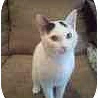 Adopt A Pet :: Thing1 - Kingwood, TX
