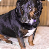 Adopt A Pet :: Roxy - Warner Robins, GA