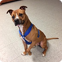 Adopt A Pet :: Brody - Lockport, NY