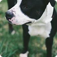 Adopt A Pet :: Roxxi - Binghamton, NY
