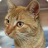 Adopt A Pet :: Patti - Colorado Springs, CO