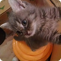 Adopt A Pet :: Teegan - Concord, NC